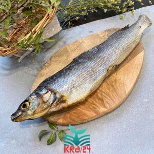 Риба муксун в'ялений Сибірський - малосольний