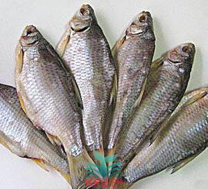 Тарань добірна в'ялена риба з ікрою